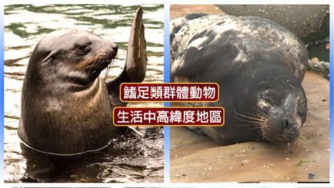 海狗、海豹、海獅、海牛、海象怎分辨?專家教你看特徵