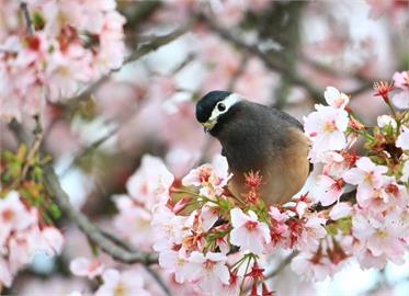 武陵農場9月住宿、露營三天兩夜 享櫻花季優先訂房資格
