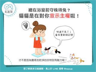 【貓貓行為學】貓咪總在浴室前守株待兔?其實是想宣示主權啦! 寵物愛很大