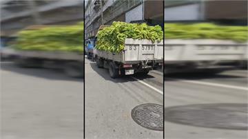農委會「1公斤5元」收購香蕉 屏東內埔小貨車排長龍場面壯觀