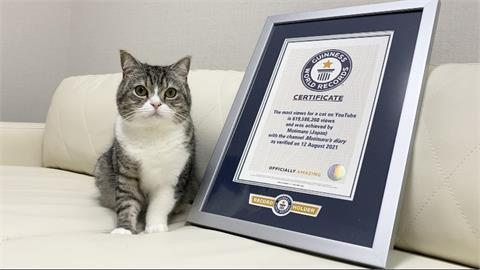 2年狂吸6億點閱!這隻貓拿到「金氏世界紀錄認證」YT最受歡迎的貓