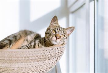 創造貓咪快樂無壓生活環境<下>