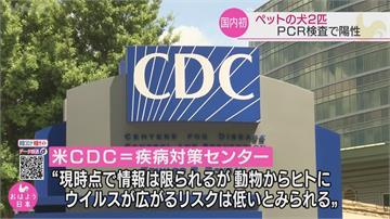 日本驚傳「2隻汪星人」染疫 篩檢後出現陽性反應