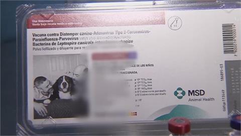 幫人打狗疫苗防新冠病毒 智利2獸醫挨罰