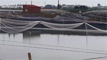 豪雨轟炸!鰻苗流光光 損失近2000萬