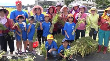 小小農夫親手割稻 雲林和平國小學童體會豐收喜悅