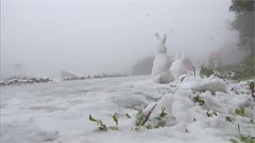陽明山凌晨下雪!大學生不顧期末考衝上山