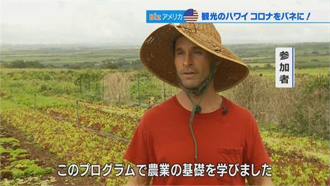 夏威夷重啟觀光!推廣農業政策 供民眾多元就業方向