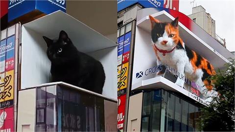 超大3D貓暴紅成東京新宿新地標!鄉民無法朝聖只好在家「還原現場」