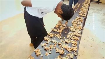 印度男子鐵頭功 60秒以額頭擊破217顆核桃