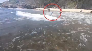 惡質!又騷擾海龜 遊客伸手抓海龜被逮送辦