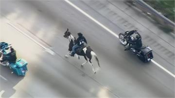 恐怖的牛仔?男子騎馬高速公路狂奔被逮