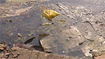 稻作停灌無活水 新竹灌溉大圳變臭水溝 魚群翻肚臭氣熏天 居民呼籲酌量放水