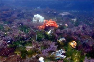 愛護海洋環境一起來!綠島潛水客下海清垃圾