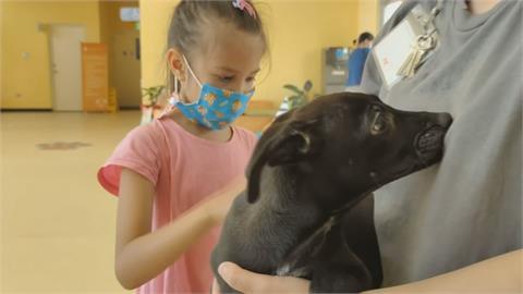 新竹市推免費寵物險 醫療減免、遺失協尋都補貼