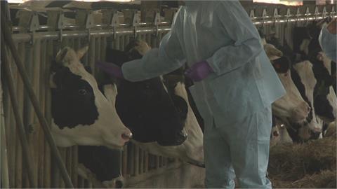 牛結節疹入侵林口 農委會急購18萬劑疫苗