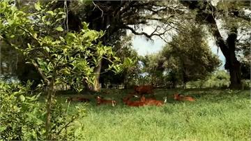 讓人畜自然共存!哥倫比亞推新畜牧 降低排放溫室氣體