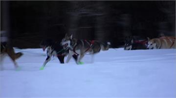狗狗拉雪橇馬拉松登場!哈士奇狂奔482公里
