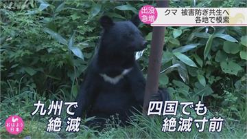 日本黑熊出沒「驅趕替代獵捕」驅熊犬、機械狼成利器