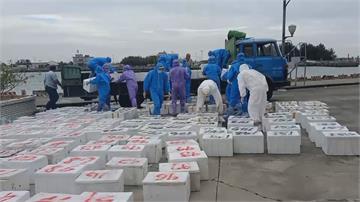 台南將軍查獲漁港漁船走私 近2千公斤大閘蟹偷渡 市價逾500萬