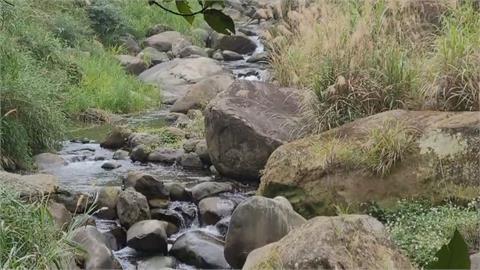 野溪乾涸... 野豬家族出山找水 衝河道萌跑