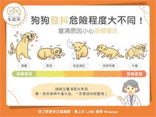 【狗狗健康】狗狗發抖危險程度大不同!快來釐清發抖原因!|寵物愛很大