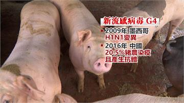 又是中國來的!「G4病毒」豬傳人恐爆大流行