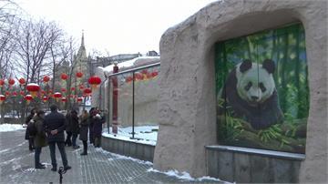 迎接農曆新年!莫斯科動物園貓熊館掛紅燈籠