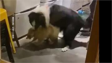 腳踢、放狗咬?知名「浣熊咖啡廳」涉虐動物