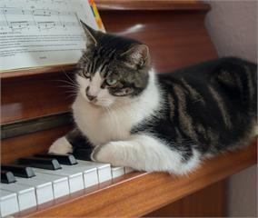 幫毛孩紓壓這樣做!古典音樂寵物收驚術