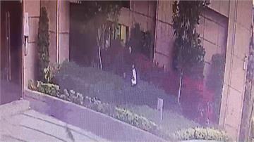 港女偷走2隻波斯貓 喬裝孕婦闖關回香港