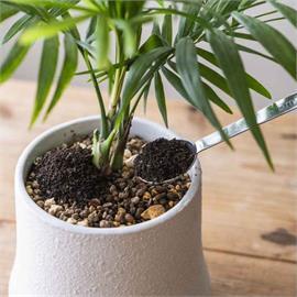 肥料怎麼挑?搞懂「施肥時機與功用」植物爆盆不是夢