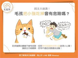 【狗貓餵養知識】飼主大崩潰!毛孩吃小強會有危險嗎?|寵物愛很大
