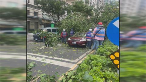 高雄分隔島路樹突然倒塌不偏不倚慘壓轎車  女駕駛一度受困