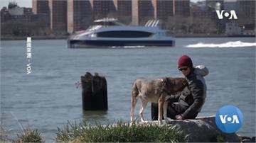 禁足時期領養寵物陪伴 美國收容所首次出現空籠盛況