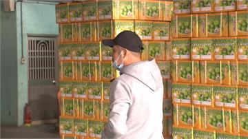 武漢肺炎衝擊農產品出口 高雄克服阻礙裝櫃銷中