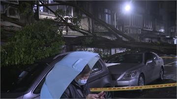 連日大雨釀禍! 北市信義區路樹倒塌壓毀2車