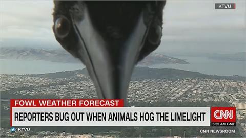 大鳥、蟲蟲亂入鏡頭 氣象主播嚇壞奔逃全程直播