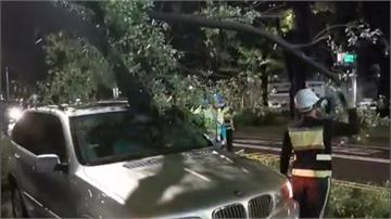 百萬名車遇路樹襲擊 成這副模樣