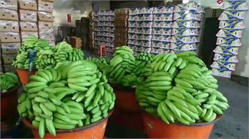 旗山蕉農克服困難!香蕉持續外銷日本