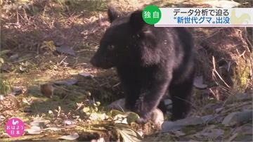 黑熊新時代來臨 今年日本黑熊傷人頻傳入侵賣場不怕人 「與熊為鄰」恐成常態