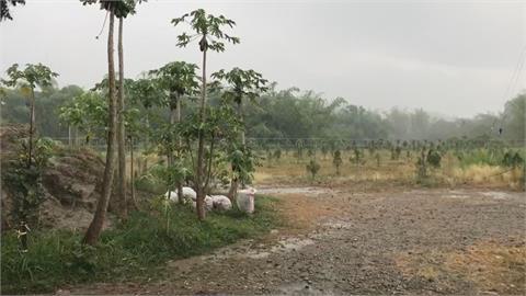 台南左鎮也下雨了!農民樂翻:讓樹多長幾吋