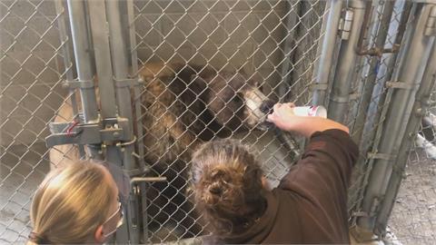 動物也可能會染病!美國奧克蘭動物園幫動物打疫苗 增加保護力