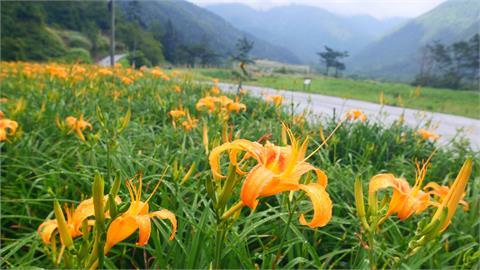 武陵農場振興國旅 祭出慶祝節慶優惠方案