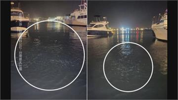 未來一週嘉南可能有規模4餘震 魚群躁動怪象 網友熱議是地震先兆