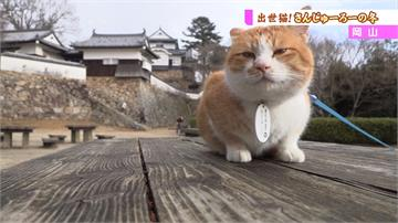 萌系力量稱霸觀光界!「空中之城」貓皇當家
