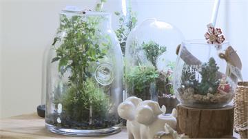 創造專屬瓶中花園 迷你生態圈正夯