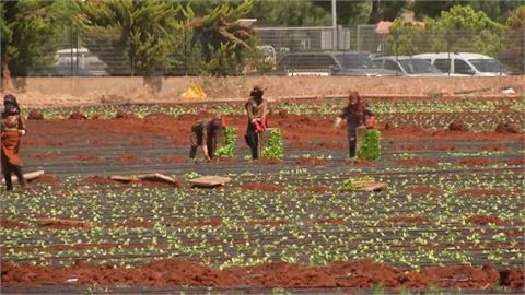 稱毒品藏紅石榴 沙國拒讓黎巴嫩蔬果進口