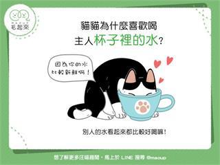 【貓咪行為學】貓貓為什麼喜歡喝主人杯子裡的水?|寵物愛很大