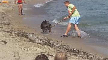 野豬突闖德國海灘 泳客驚嚇全都讓路